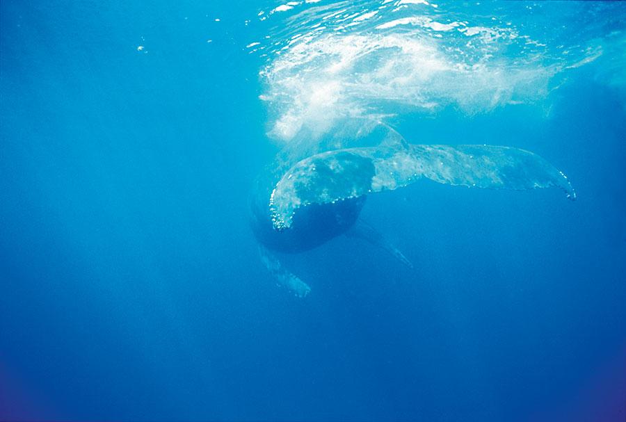 baleine-24x32