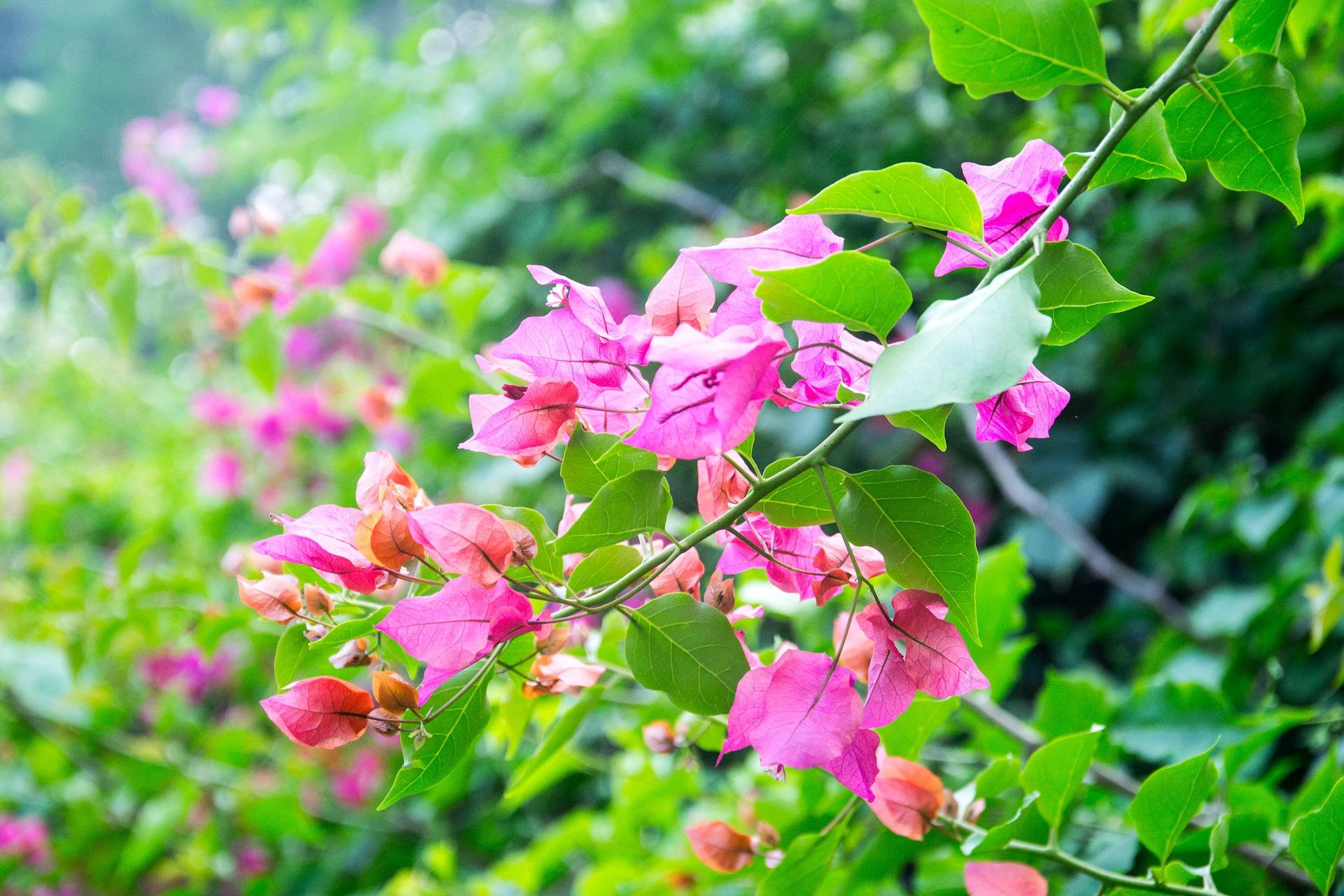 Les plantes typiques des jardins réunionnais – COLIPAYS – Le blog